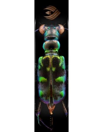 "Powell Peralta Skateboard BISS K20 Tiger Beetle 8.25"" Shape 248 (solo tabla)"